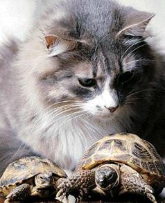 Содержание сухопутной черепахи