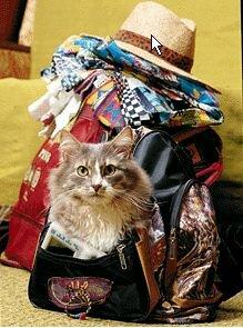 Где оставить кошку на время отпуска