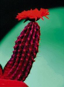 Остроконечные кондиломы